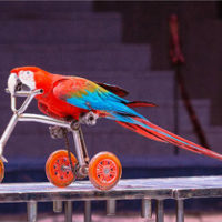 попугай-шоу