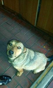 собака-ищет-и-ждет-своего-хозяина