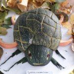 Мудрая черепаха Румянкова Алевтина 5 кл. МОУСОШ с. Покровская Арчада - №53